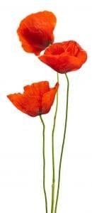 Blumendeko für Ihre Büroräume